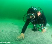 次の記事: ボランティアダイバー募集! お台場で海底清掃