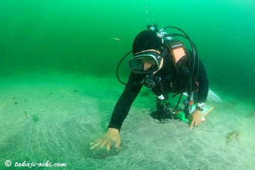 海底を触りヤドカリを探すむらいちゃん(撮影:越智隆治)