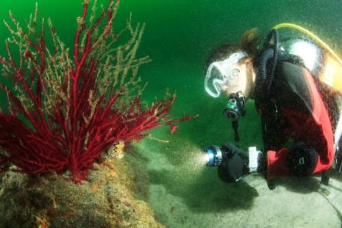 富戸の海でイロカエルアンコウを探すルコさん