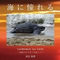 オサガメ写真展(提供:来住尚登)