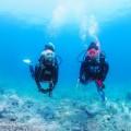 水中のダイバー(撮影:大川拓哉)