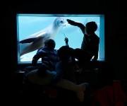 次の記事: イルカと一緒に寝る夢の時間を満喫!~2014クリスマスパーテ