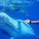 TV番組「伊藤英明が大接近!奇跡の海のザトウクジラ」(撮影:越智隆治)