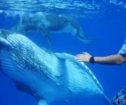 前の記事: 伊藤英明さんと越智カメラマンがタッグ!トンガのザトウクジラ親