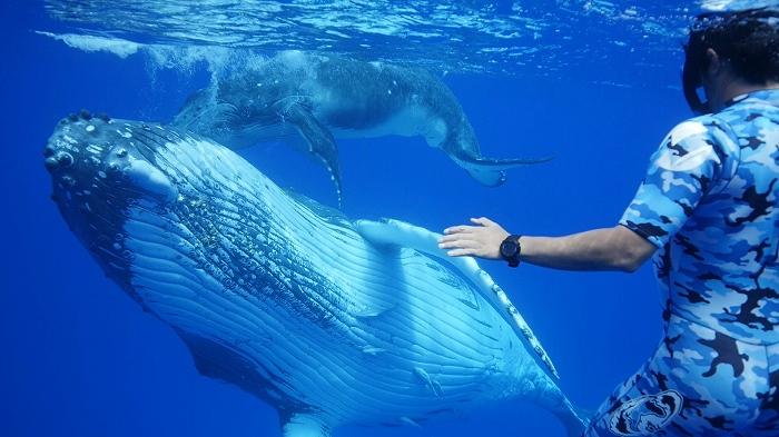 伊藤英明さんと越智カメラマンがタッグ!トンガのザトウクジラ親子に迫る!