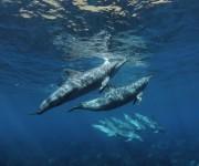 次の記事: 御蔵島のイルカは121頭!? ~解析作業6000分の個体識別