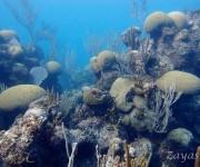 次の記事: サンゴ分類のルネサンス期!? ~大西洋に浮かぶバミューダのサ