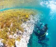 次の記事: ダイバーにオススメの水中ストロボ2機種 ~S-2000とYS