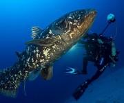 次の記事: 水深120mで生きた化石・シーラカンスを撮影 ~海洋生物学者