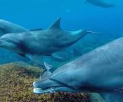 前の記事: 御蔵島のドルフィンスイムは6月がオススメの3つの理由