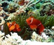 前の記事: 世界初の水深30m耐圧防水!そのまま海中に持っていける革新的