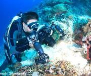 次の記事: ストロボなしでここまで撮れる! 水中ライトRGBlue Sy