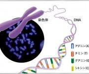 次の記事: 世界初のサンゴのゲノム解読でわかったこと
