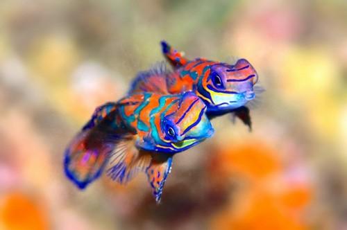 パプアニューギニアのニシキテグリ(撮影:中村卓哉)