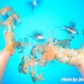 水のとき写真展(澤田さん)