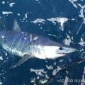 サメ座談会