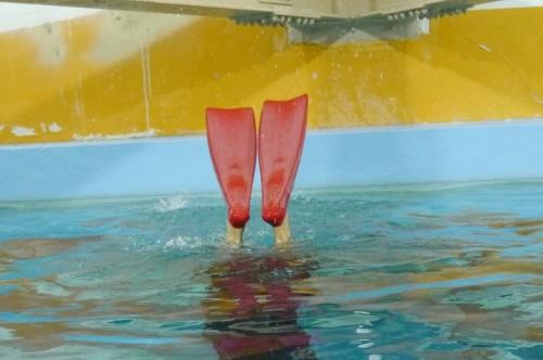 上達すると、クジラのテールとフィンが同じような動きになる