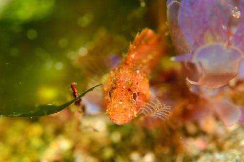 こんなにかわいい生物たちの生活を邪魔しないように、環境を変化させないように、気をつけていきたいです