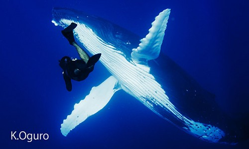 トンガでクジラを撮影する越智隆治(撮影:小黒)