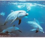 前の記事: カマストガリザメも登場! 20年振りの御蔵島・ドルフィンスイ