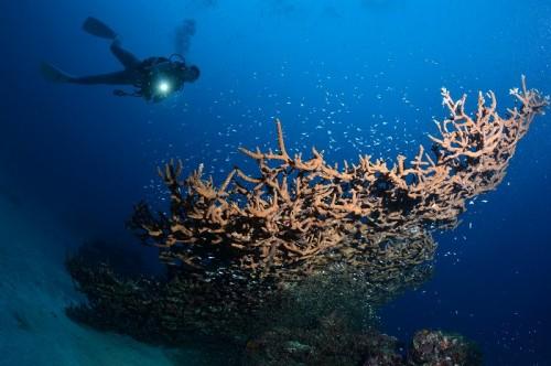 パナリ干瀬1の斜めに倒れた巨大なサンゴ(撮影:中村卓哉)