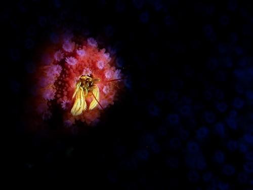 マクロ賞:夜桜