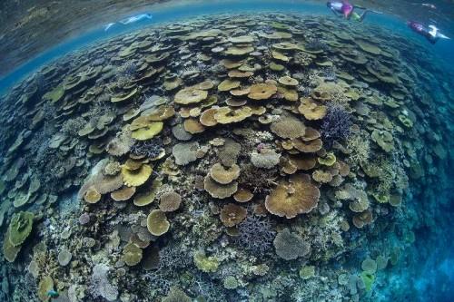 サンゴ賞:一面の珊瑚