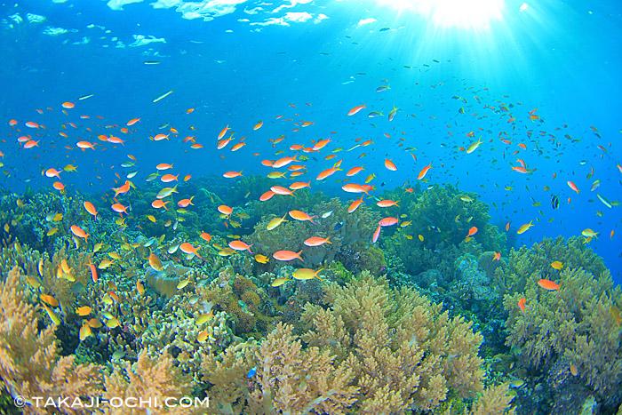 ハードコーラルやソフトコーラルが美しい、リーフダイビング ~戦後70年。パプアニューギニア・ラバウルの海を潜る~ | オーシャナ