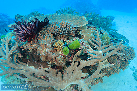 今回あまりふれていないが、浅瀬のサンゴの群生も素晴らしい
