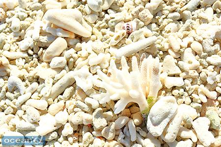 島の西側の海岸には、サンゴのかけらが堆積している