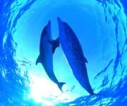 次の記事: 海獣カメラマン・越智隆治スライドトークショーが1月16日に開