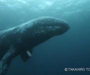 前の記事: ダイビング中にコククジラと遭遇のミラクル! ~房総半島・西川