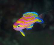 前の記事: 関西ダイバーの潜り初めにオススメ! 紀伊半島・須江「安全潜水