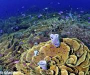"""前の記事: """"海のアマゾン""""と呼ばれる世界一のサンゴ礁"""