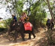 次の記事: ゾウ体験から激安マッサージまで ~サムイ島で帰国までの時間も