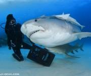 次の記事: 憧れのサメに、口の中が見えるほど大接近! ~2016年バハマ