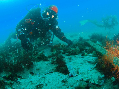 海の生物はたくましい。瓦礫の下をのぞくと大きなカレイが2匹