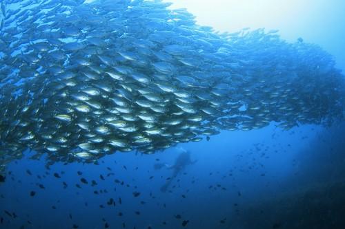 驚くほど魚影が濃い、タオの海!