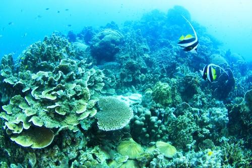 タオ島、サムイ島のダイビング