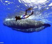 次の記事:  マッコウクジラの群れに大接近!~スリランカ・ホエールスイム