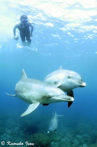 イルカと泳ぐスキンダイバー