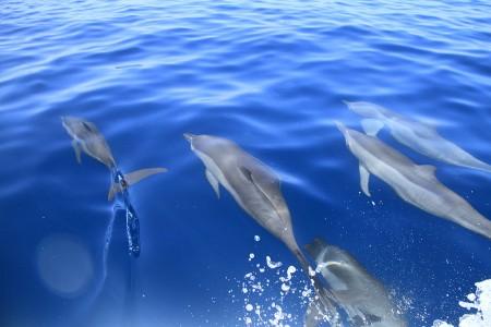 停泊中の母船の周りにいたイルカをディンギーに乗って見に行く
