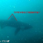 今回登場したサメ