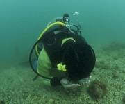 前の記事: ガチンコ検証! ロゴシーズを使って、水中で迷子になったダイバ