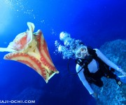 次の記事: 水中のトリックアート美術館? ~久米島の名物ダイビングポイン
