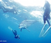 前の記事: 【募集中!】イルカ娘コンビがお届けする! 6月の御蔵島ドルフ