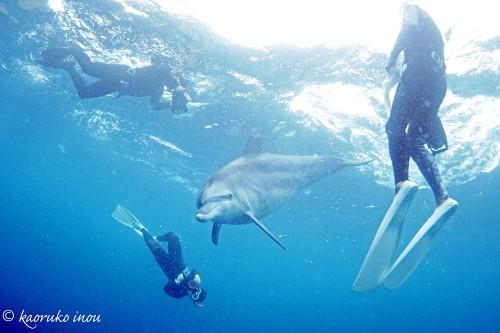 【募集中!】イルカ娘コンビがお届けする! 6月の御蔵島ドルフィンスイムツアー