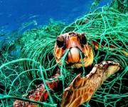 """次の記事: 生き物に有害な""""ゴーストネット""""から作られた水着がフォースエ"""