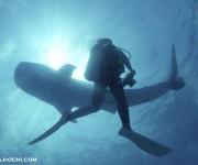 前の記事: 世界で一番ジンベエザメを撮れる海! ~越智隆治と行くセブフォ