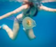 前の記事: クラゲの中に住む魚!? ~撮影した写真家ティム・サムエルさん